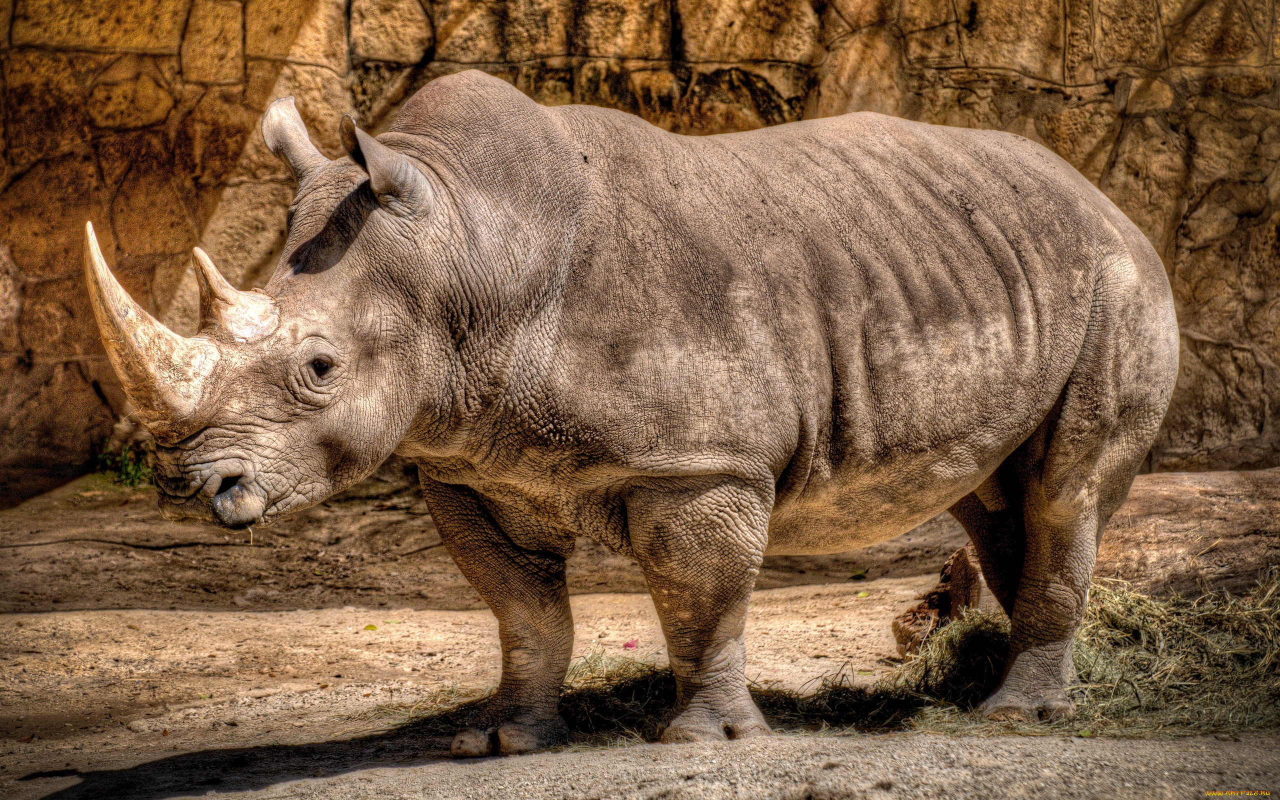 носорог в картинках понравившуюся программу